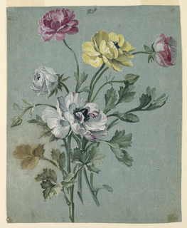 Drawing, Study of a Bunch of Roses, 1750-1775