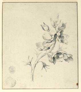 Drawing, Study of a Bough of Wild Roses, 1775-1800