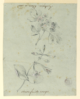Drawing, Study of a Hawthorne and Honeysuckle Bough, 1775-1800
