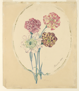 Drawing, Four carnations