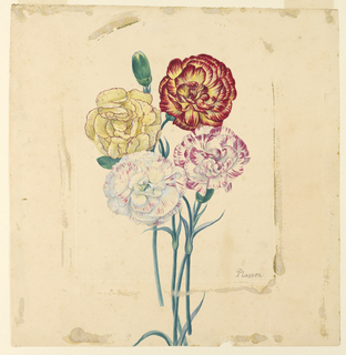 Drawing, Four carnations, ca. 1840