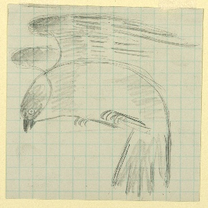 Study of a flying bird, resembling a canary, seen in left profile, with head down.