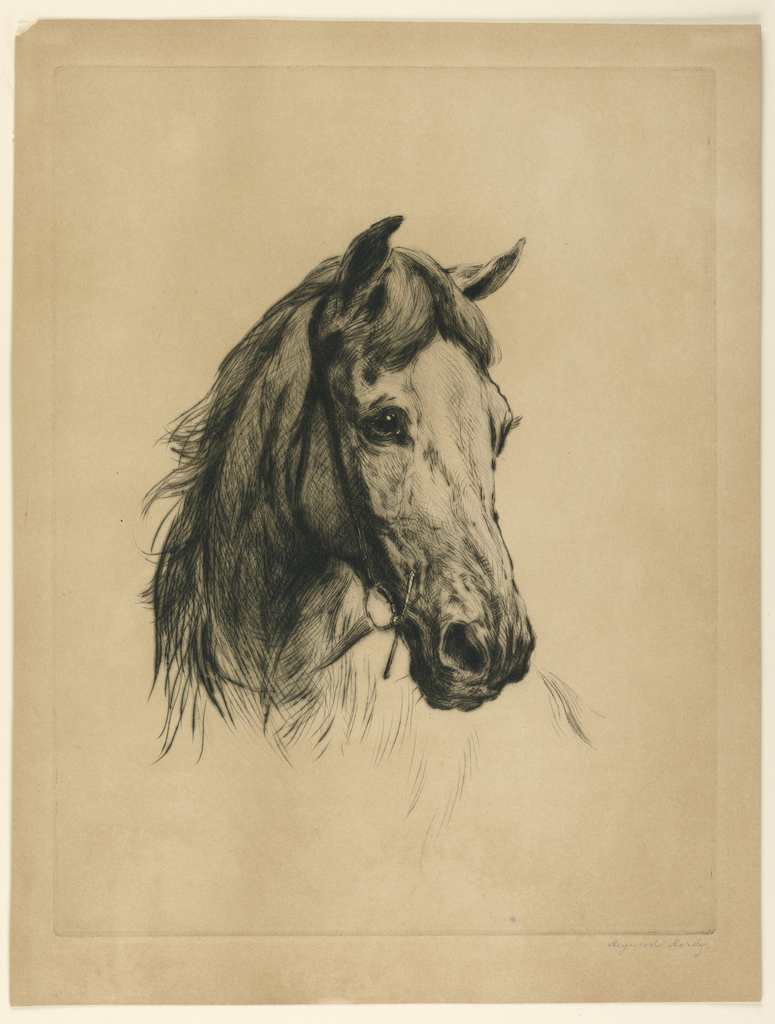 Head of a horse in frontal view, slightly turned to right.