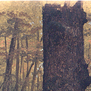 Lower part of a tree is shown against a background of undergrowth and trees.