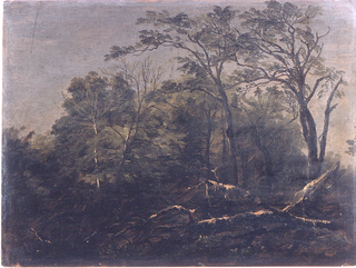 Horizontal view of the woods with a broken tree trunk lying in the foreground.