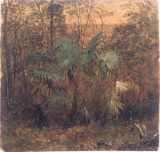 A bush-like palm is shown in the center of deep foliage.