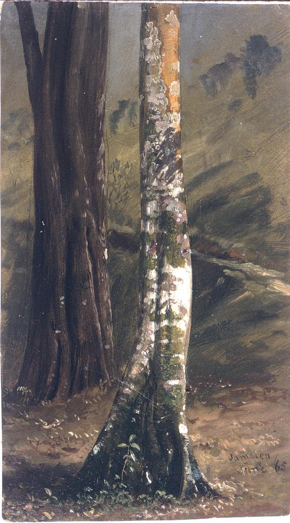 Drawing, Tree trunk, June 1865