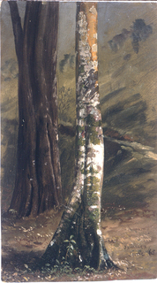 Drawing, Tree trunk, June 1865
