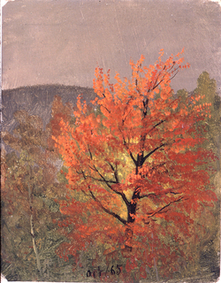 A maple with red leaves is shown at center, surrounded by trees. In the distance, a hill is shown.