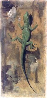 Drawing, A Lizard, June 1865