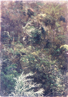Vertical image of a hillside covered by bushes and trees.