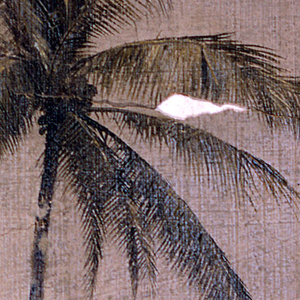 Drawing of an upper part of the truch and the top of a palm tree.