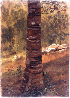 Vertical image of the lower part of the trunk of a tree is shown.  A road, stones, bushes, trees are behind it.
