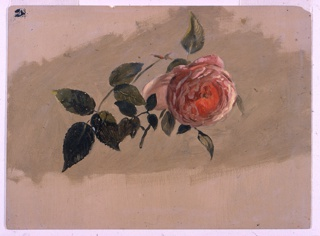 Drawing, A Rose Bough, 1860–70