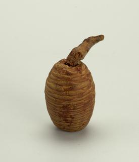 Pod,tree