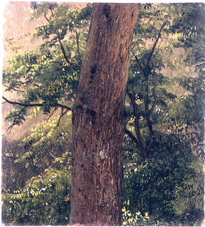 A part of the trunk of a tree is shown against a background of trees and bushes.  Place and date, below right.