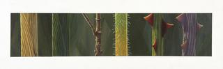 Concept Art, Stem Study, A Bug's Life, 1998