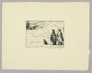Print, Penguins