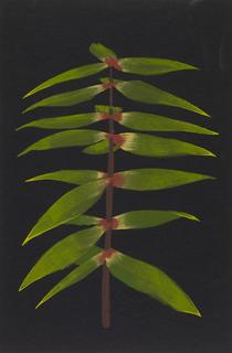 Concept Art, Plant Study, Up, 2009