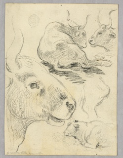 Vertical composition with sketches of cows. Above: a lying cow seen from the back and the head of a cow seen from the left side. Below: The head of a cow is seen from the right side in big dimensions and a lying cow is seen from the left side and above it with part of a right hind leg of a cow