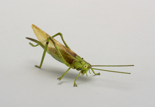 Figure of a green grasshopper with realistic touches of other color, transparent wings.