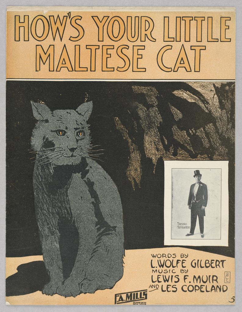 Sheet Music, How's Your Little Maltese Cat, 1913