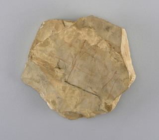 Limestone fragment