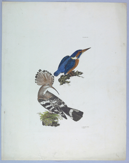 Print, Lithographs, colored, thirty plates from a book on birds.
