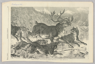 A group of four wolves attacks a lone stag on the ice. Landscape in background.