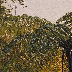 The thick of dense jungle below a grey-blue sky, a fern tree distinctive in the center.