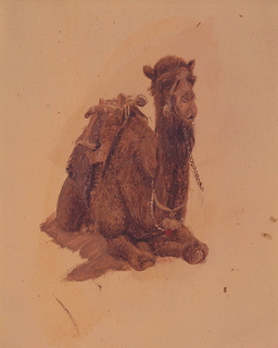 Vertical drawing.  The crouching animal is shown obliquely from the front and isolated with no background.
