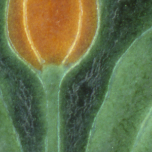 """Coarse white earthenware body with press-molded design of single tulip and leaves.  Mat glazes in dark red and light green, with butterscotch mat glaze on blossom.  The tulip lossom is divided symetrically by thin walls of clay, the raised contours partitioning the inlaid glazes.  Palette is naturalistic with """"Grueby green"""" between the leaves and the background."""