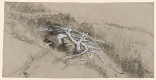 Drawing, Tree Roots on a Hillside, Prout's Neck