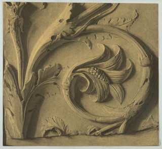 The present plaster molding design is modeled on the acanthus plant, with its swirls, small berries within striated petals and segmented leaves.