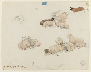 Recto: A view of three groups of resting sheep partially filled in with color. Also on this sheet are a sketch of a standing sheep, partially colored and a ram's head drawn lightly in graphite. 
