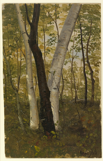 Vertical view of prominently shown central group of one dark beech and two light birch trees.
