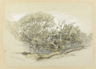 Recto: Horizontal view of two oak trees appearing in a hilly foreground, one on right gnarled and savaged by age in contrast to one on left which stands erect and in full bloom. In distance are additional trees indicated by hastily shaded forms. Verso: Horizontal view of an enormous oak tree rising in central middle distance, in a vale between two wooded hillsides.  Bushes grow around it.  A road is shown in left foreground.