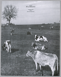 "Four cows in the foreground of a field of grazing cows are imprinted in small capitals with the names of fish dishes offered on the restaurant's menu. A wire fence is barely visible at the front edge; in the background, against a pale gray sky, are a bare tree and outbuildings on the left and  some shrubbery on the right. At the top center, Restaurant/ Florent/ 69 Gansvoort Street/ 989-5779/ ""Best Fish in the Meat District"" are imprinted in capitals, with Florent larger and bolder."