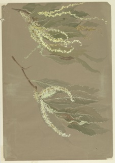 Horizontal sheet depicting two chestnut branches, with leaves and blossoms. On reverse of sheet, a single chestnut branch with blossoms.