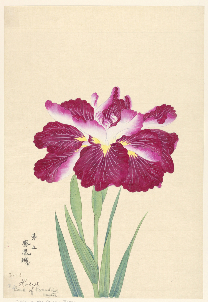 A large magenta iris, showing the upper portion of the stem, leaves, and bud, against a neutral background.