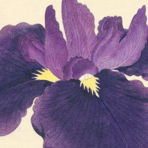 A large iris in deep purple; inner leaves lighter in hue.
