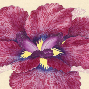 A large iris, outer perianth leaves in mottled magenta; inner leaves purple.