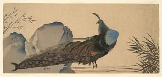 Print, Peacock