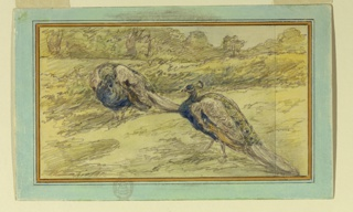 The birds are shown standing in an oblique view, facing each other.