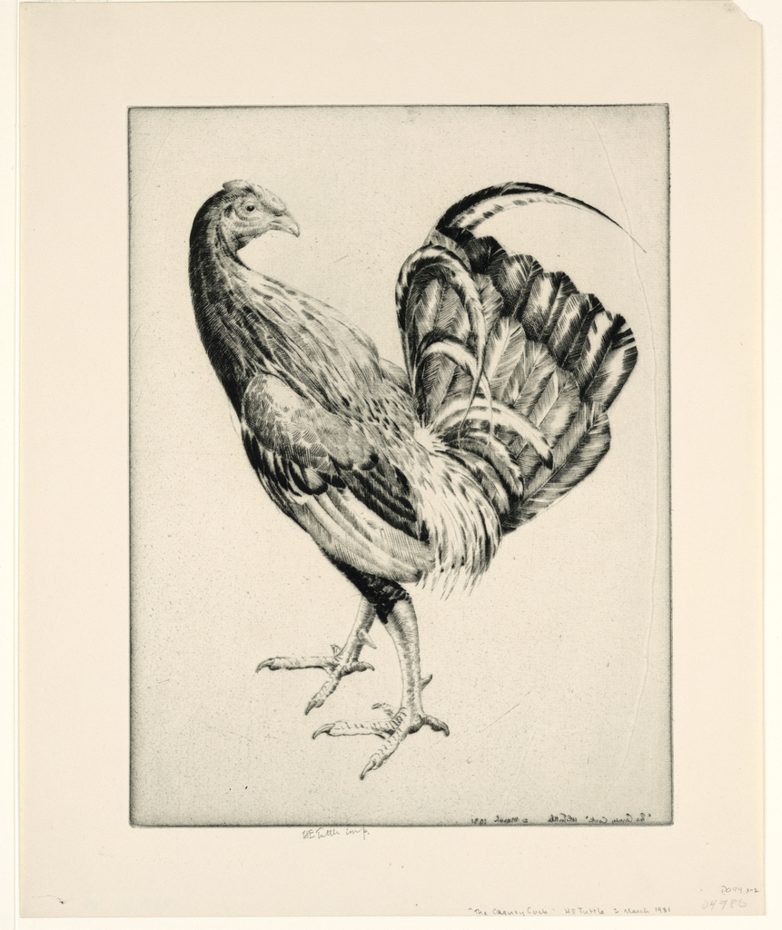 Print, Game Cock (Carney Cock), 1931