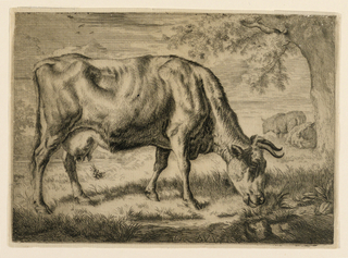 Print, Cow and Two Sheep at the Foot of a Tree, 1670