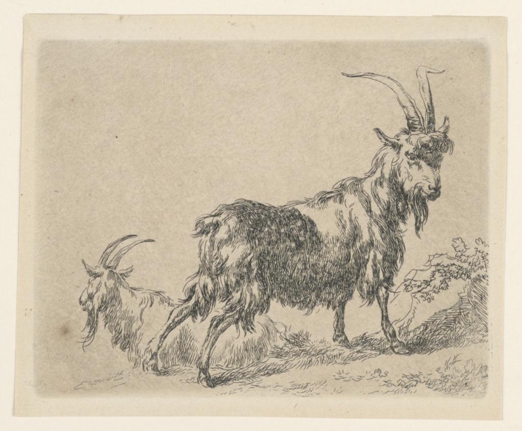 "Print, Two Goats,  from Berchem's ""Animalia"" (Animals) [ Animalia ad vivum delineata et aqua forti aeri impressa Studio et Arte Nicolai Berchem]"