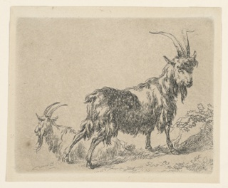 In froeground, a young goat standing in side view, toward right. His head in frontal position. At left, another goat lying in side view facing left. No inscriptions.