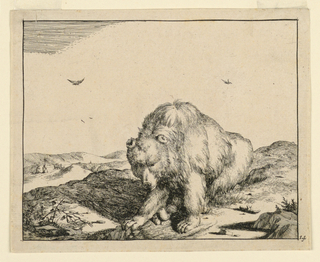 Print, Seated Bear, from a Set o