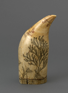 Whale's tooth incised on one side with clipper ship flying American flag, three small buildings at one side, large 5-pointed and wreathed star overhead; on other side, a tree with red fruit. Tip of tooth decorated with leaf and berry design; base of tooth has cross-hatched band with serrated pattern on edge, each point having a central red dot.